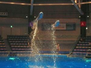 飛ぶイルカ