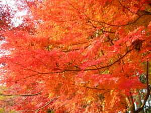 理窓会公園の紅葉