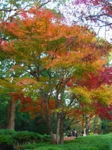 戸定公園の紅葉