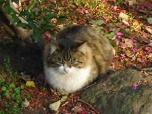 みさと公園の猫