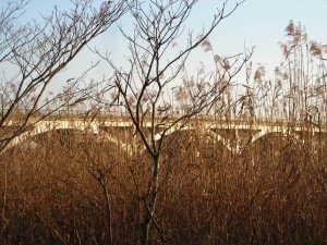 葦に透ける手賀大橋