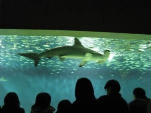 葛西臨海水族園のサメ
