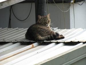 運河駅の猫