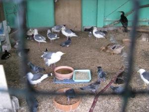 野鳥の病院(市川野鳥の楽園)