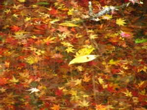 清水公園の水紅葉