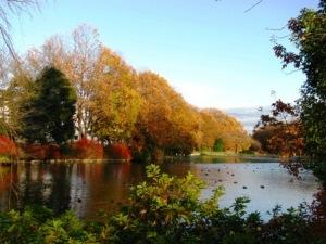 理窓会記念自然公園の紅葉