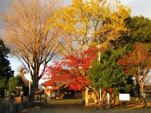 円福寺の紅葉