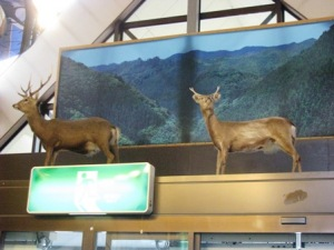 丸山高原の鹿
