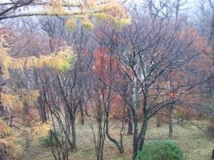 中禅寺湖紅葉