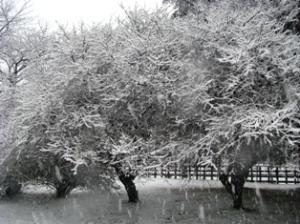 雪の気象大