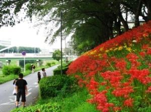 運河の彼岸花