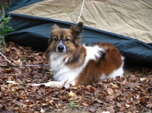 Camping Dog in Tsukuba