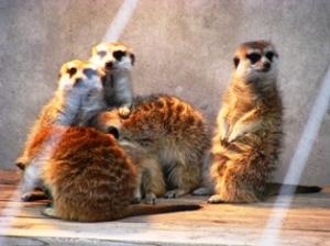 市川市動物園