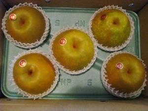 手賀沼の梨
