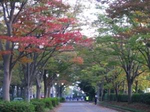 柏の葉公園前