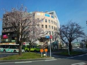 我孫子駅前桜