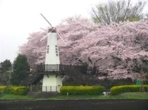 大宮公園・見沼桜回廊