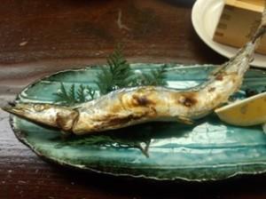 吉春の新秋刀魚