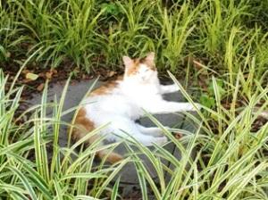 猫クーラー