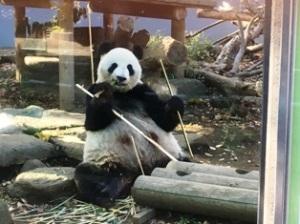 上野のパンダ 母親