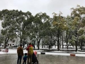 柏公園の雪