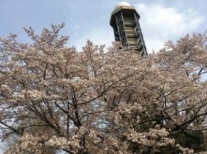 気象大学校の桜