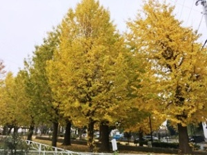 柏ふるさと公園