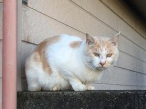 北小金の猫