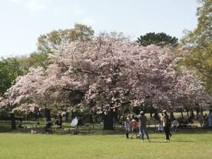 柏の葉公園